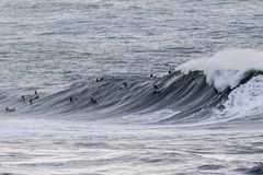 Les surfers montant les vagues énormes sur la côte ouest, près du point de pilier et des francs-tireurs échouent, Half Moon Bay,  photos libres de droits