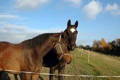 Les têtes de deux chevaux. Photos libres de droits