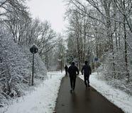 Les taqueurs fonctionnent sur le chemin parmi le bois dans l'hiver Photographie stock