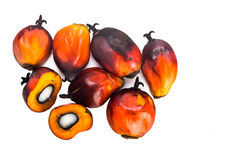 Les tas du palmier à huile récemment récolté porte des fruits sur le fond blanc Images stock