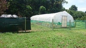 Les tentes simples globales de poulet image libre de droits