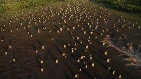 Les termites de boussole commémorent leur industrie dans la sculpture Ces monticules étonnants sont de dix pieds grands et toujou photos stock