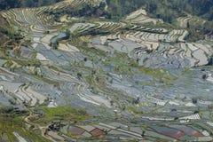 Les terrasses de riz Images stock