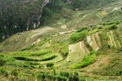 Les terrasses sur le pierre-plateau de Dong Van, Viet Nam Photo stock
