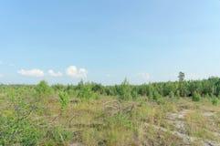 Les terres en friche de l'incendie de forêt en 2010 sont envahies avec des bouleaux en Russie centrale Photographie stock libre de droits