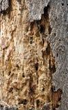 les textures de l'écorce d'arbre Withered photos libres de droits