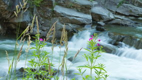 Les tiges vertes de l'herbe sur le rivage pierreux d'une montagne les déchirent Photo libre de droits