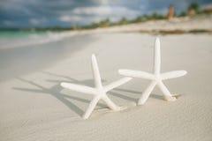 Les étoiles de mer blanches en mer ondulent le réel, la mer bleue et l'eau claire Photos stock