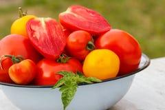 Les tomates avec les feuilles vertes en métal roulent dans le jardin le jour ensoleillé Images stock