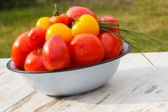 Les tomates en métal roulent avec la ciboulette verte dans le jardin le jour ensoleillé Image libre de droits