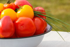 Les tomates en métal roulent avec la ciboulette verte dans le jardin le jour ensoleillé Photos stock