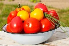 Les tomates en métal roulent avec la ciboulette verte dans le jardin le jour ensoleillé Images libres de droits