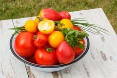 Les tomates en métal roulent avec le persil et la ciboulette verts dans le jardin le jour ensoleillé Images stock