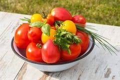 Les tomates en métal roulent avec le persil et la ciboulette verts dans le jardin le jour ensoleillé Images libres de droits