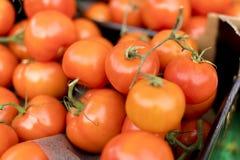 Les tomates mûres, fraîches, juteuses et délicieuses sur un marché calent Images libres de droits