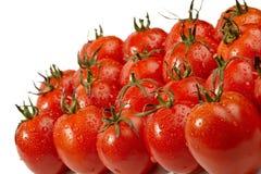 Les tomates rouges et humides se ferment vers le haut Images libres de droits