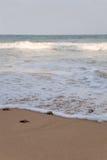 Les tortues de bébé le faisant est chemin vers l'océan Photo libre de droits