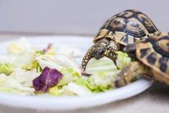 Les tortues prennent le déjeuner Images libres de droits