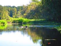 Les tortues se reposent sur un rondin, le long de la banque d'une rivière de la Floride photo stock