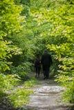 Les touristes entrent profondément dans la forêt images stock