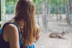 Les touristes observent les animaux de l'autobus en parc de safari image stock