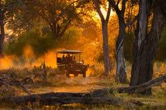 Les touristes regardant le troupeau d'impala sur le jeu de soirée conduisent photo stock