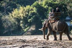 Les touristes sur le trekking d'éléphant dans un éléphant campent Photos stock