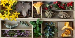 Les trésors de la forêt. Images stock