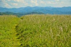 Les traînées passent par un champ d'herbe à une montagne. image stock