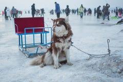 Les traîneaux de chien se reposent sur la neige à Harbin Photo libre de droits