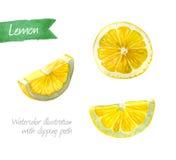 Les tranches de citron ont isolé l'illustration d'aquarelle image libre de droits