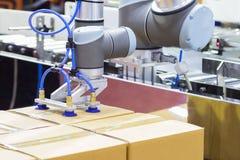 Les transferts de bras de robot cartonnent la boîte à la ligne de convoyeur images libres de droits