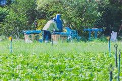 Les travailleurs aident à prendre des légumes photographie stock libre de droits