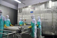 Les travailleurs arrangent des crevettes dans une ligne à la machine de congélation dans une usine de fruits de mer au Vietnam Images stock