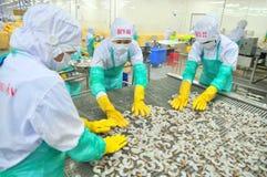 Les travailleurs arrangent des crevettes dans une ligne à la machine de congélation dans une usine de fruits de mer au Vietnam Photos stock
