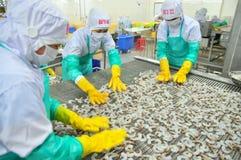 Les travailleurs arrangent des crevettes dans une ligne à la machine de congélation dans une usine de fruits de mer au Vietnam Image libre de droits
