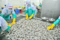 Les travailleurs arrangent des crevettes dans une ligne à la machine de congélation dans une usine de fruits de mer au Vietnam Images libres de droits