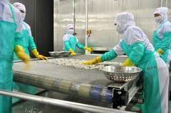 Les travailleurs arrangent des crevettes dans une ligne à la machine de congélation dans une usine de fruits de mer au Vietnam Photos libres de droits