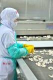 Les travailleurs arrangent des crevettes dans une ligne à la machine de congélation dans une usine de fruits de mer au Vietnam Photo stock