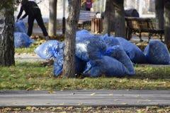 Les travailleurs de la municipalité rassemblent des feuilles en parc Les assistants sociaux de femmes ont enlevé le feuillage photographie stock libre de droits
