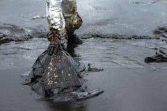 Les travailleurs enlèvent et nettoient le pétrole brut renversé avec le PAP absorbant photos libres de droits