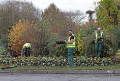Les travailleurs plantent des fleurs dans le parterre dehors photo stock