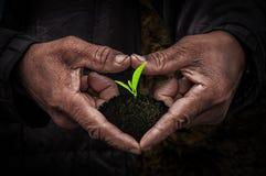 Les travailleurs remettent avec des jeunes plantes Images stock