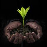 Les travailleurs remettent avec des jeunes plantes Photographie stock libre de droits