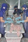 Les travailleurs sont découpage des filets du poisson-chat de pangasius dans une installation de transformation de fruits de mer  Image stock