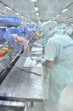 Les travailleurs sont découpage des filets du poisson-chat de pangasius dans une installation de transformation de fruits de mer  Images stock