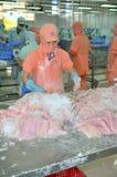 Les travailleurs sont découpage des filets du poisson-chat de pangasius dans une installation de transformation de fruits de mer  Photographie stock libre de droits