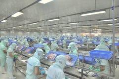 Les travailleurs sont découpage des filets du poisson-chat de pangasius dans une installation de transformation de fruits de mer  Photos stock