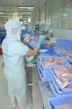 Les travailleurs sont pesage du filet de poisson-chat de pangasius dans une installation de transformation de fruits de mer dans  Image libre de droits