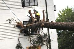 Les travailleurs travaillent à enlever un grand arbre images libres de droits